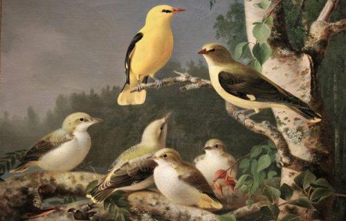 Науковий семінар «Регіональні аспекти орнітологічних досліджень»