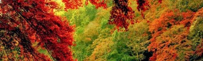 20 вересня – День працівника лісу