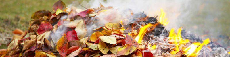 Чому не можна спалювати листя та що з ним робити
