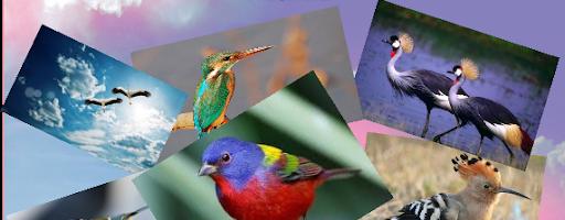 До Міжнародного дня птахів
