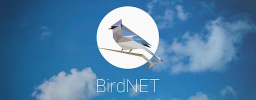 "Онлайн конференція: Майстер-клас ""Онлайн-курс BirdID"""