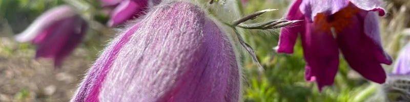 Весняне квітування ботанічного саду ХНУ